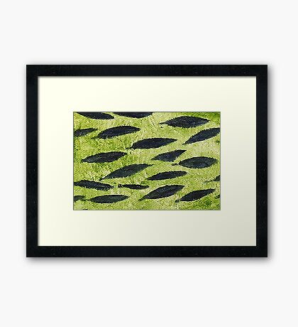 Impression Water Reed Minnows Framed Print