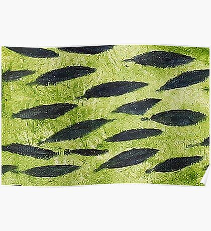 Impression Water Reed Minnows Poster