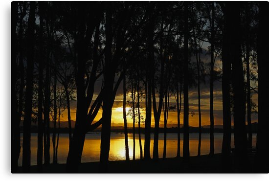 Sunset and Trees by Sea-Change