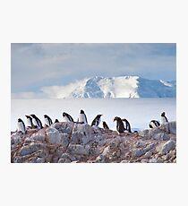 The Creche (Gentoo Penguins, Port Lockroy, Antarctica) Photographic Print