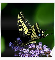 ELUSIVE BUTTERFLY Poster