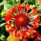 Orange delight by Mechelep