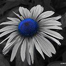 Blue Wonder by Mechelep