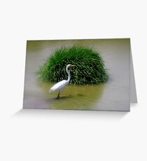 Egret.... Greeting Card