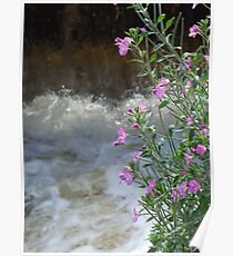 Foam And Flower Poster