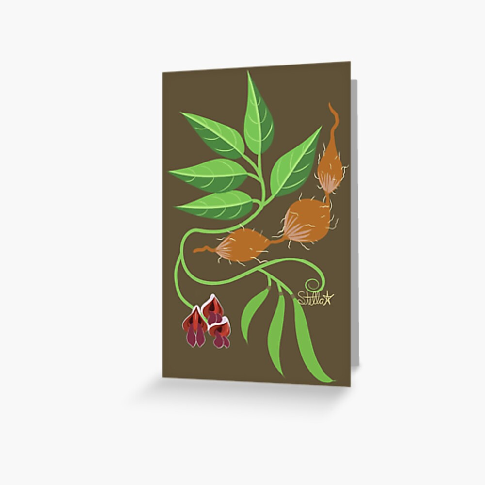 Groundnut - Apios Americana - Indian Potato Greeting Card