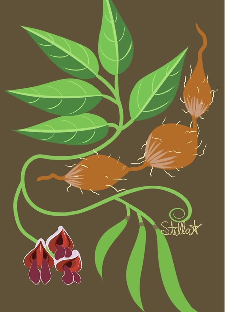 Groundnut - Apios Americana - Indian Potato by LegendofStella