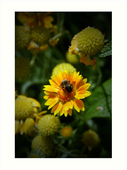 Bumble Bee by Kimberly M. Rupert