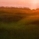 Seagrass Sunset by Aimee Stewart