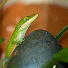 Garden Lizard by georgiaart1974