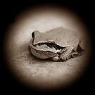 Tree Frog In Sepia by Jonice
