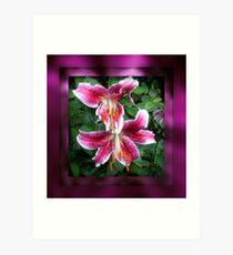 Star Gazer Lillies Art Print