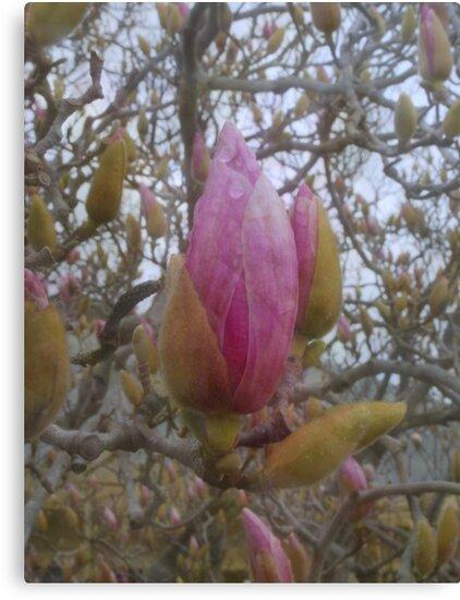 Loads of Buds by Lozzar Flowers & Art