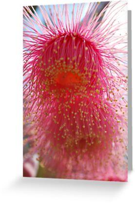 Splashes of Native Bloss (Eucalyptus Blossom) by Lozzar Flowers & Art