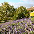 Bluebells at Roseberry Topping by Funkylikeabee