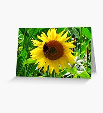 Face of Summer Greeting Card