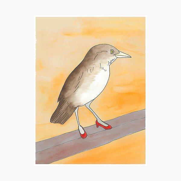 Lyndon - Birds in Heels Original Photographic Print