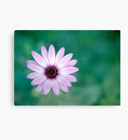 Just One - purple daisy Canvas Print