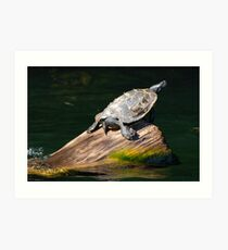 Turtle On A Log Art Print