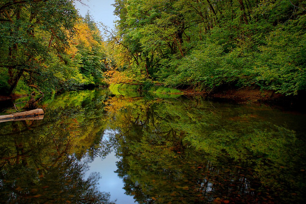 Reflections Of Light ~ Siuslaw River ~ by Charles & Patricia   Harkins ~ Picture Oregon