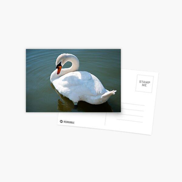The Swan 1 Postcard