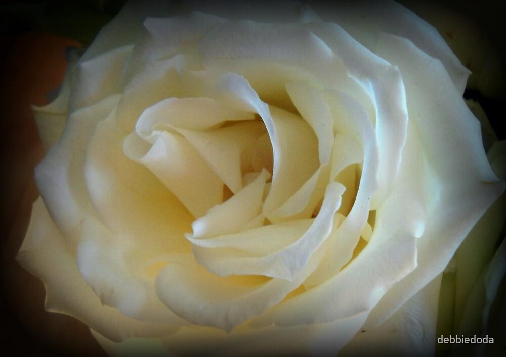 White Rose by debbiedoda