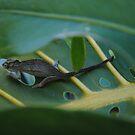 Chameleon  by Alani