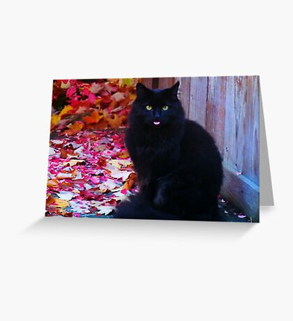 Kitty with an attitude! Greeting Card