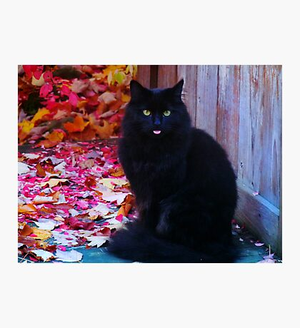 Kitty with an attitude! Photographic Print