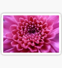 Beautiful pink flower close-up Sticker
