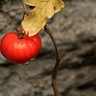 Like A Tomato In The Rain ... by J J  Everson