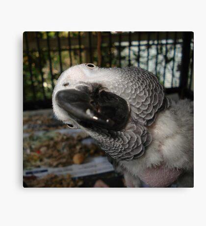 THE FUNNIEST BIRD IN FLORIDA Canvas Print