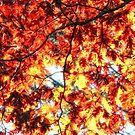 Seasons change by Angela King-Jones