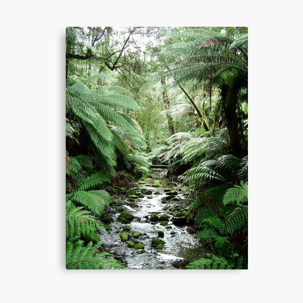 Rain forrest Creek at dawn Canvas Print
