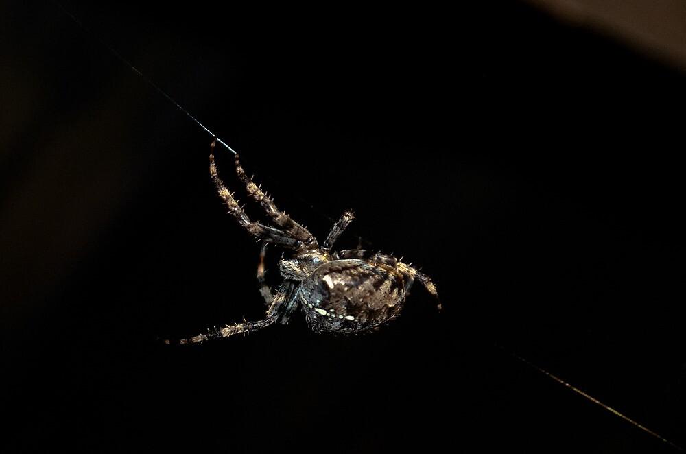 Autumn Arachnid by angelimagine