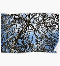 New Growth In Spring Poster