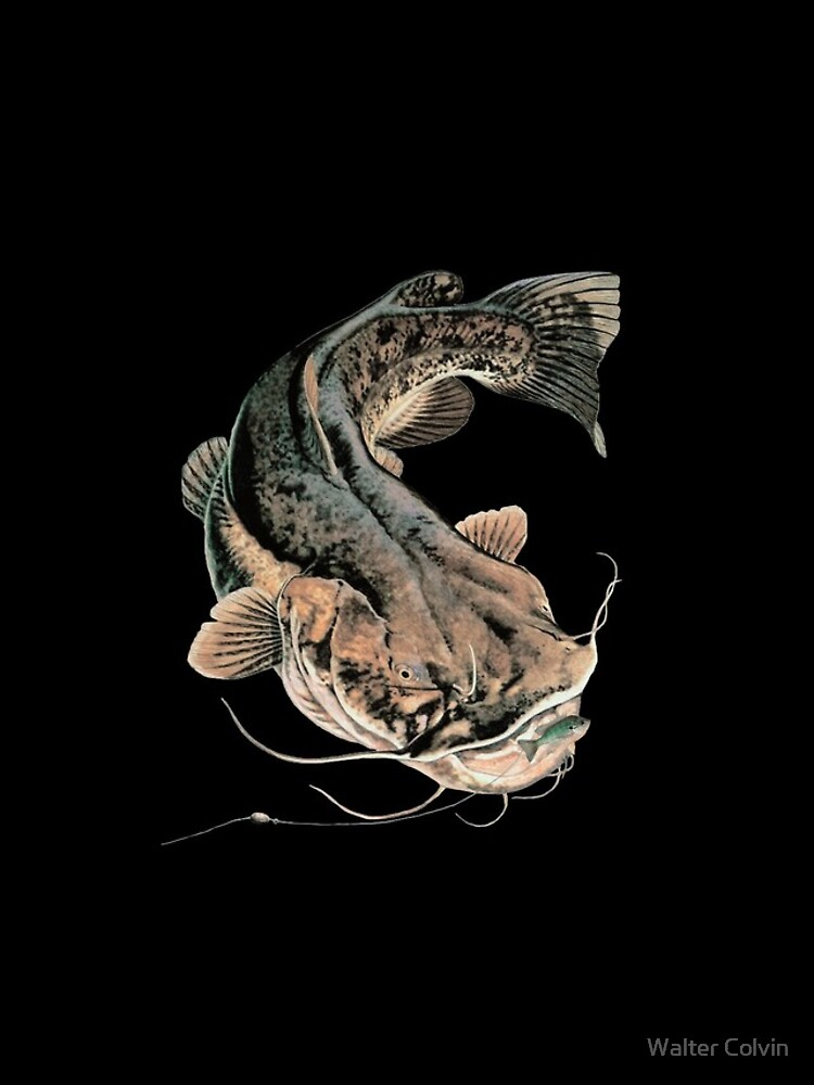 Flathead Catfish Fishing by Skyviper
