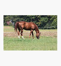 A Beautiful Horse Photographic Print