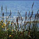 Beach View by MaluC