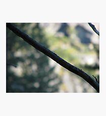 Diagonal Photographic Print