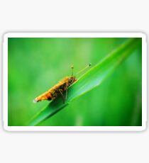 Lepidoptera Sticker
