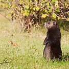 Black Coat Groundhog by DigitallyStill