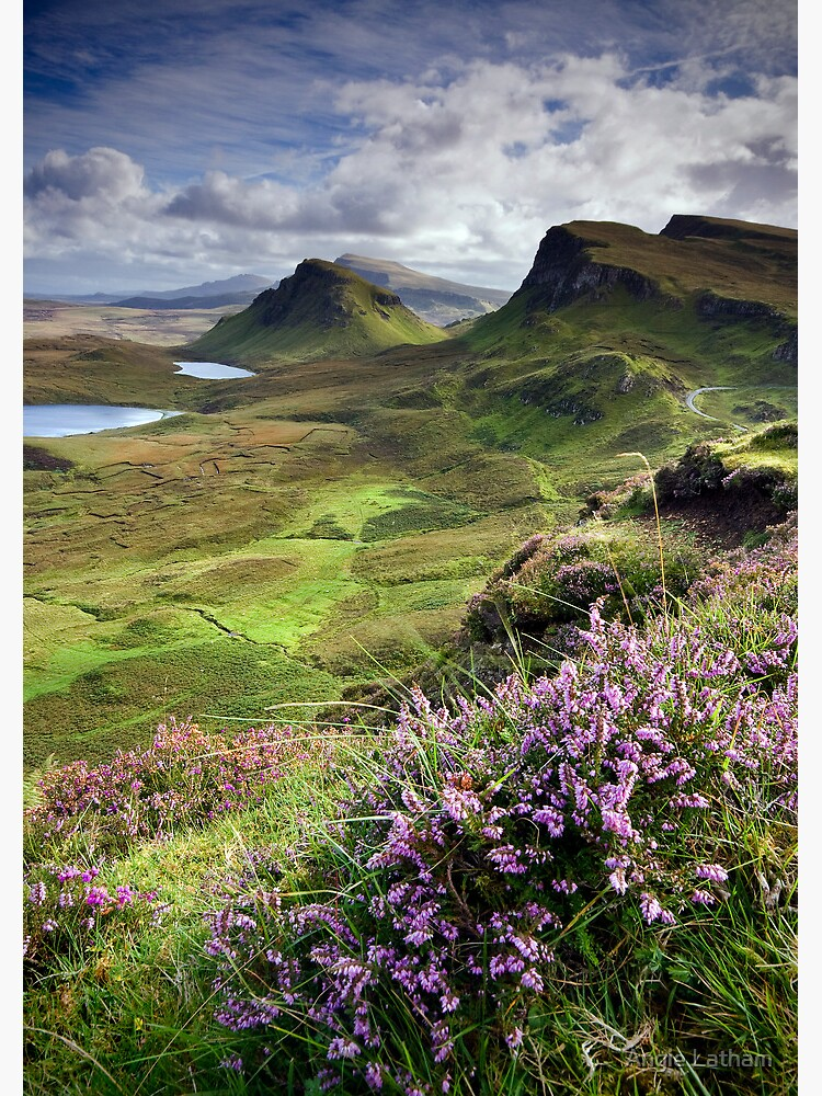 Scotland: My Bonny Heather by AngelaBarnett