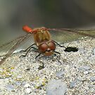 Dragon Fly. by Livvy Young