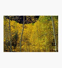 Golden Trees Photographic Print