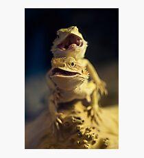 Dragons Photographic Print