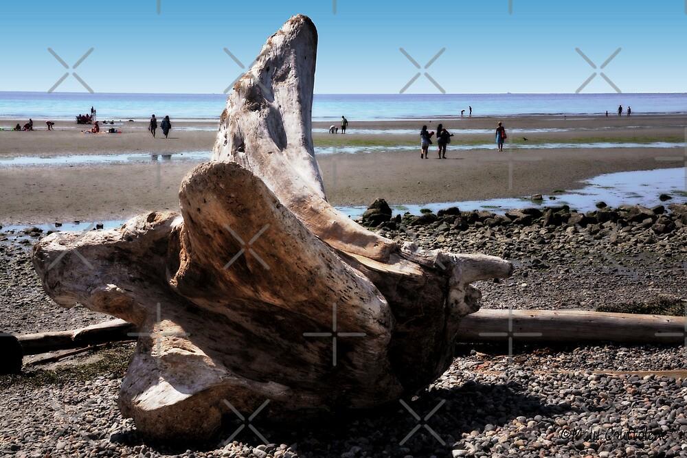 Fallen tree on the Beach by MaluC