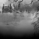Fog in Central Park by Jeff Burgess