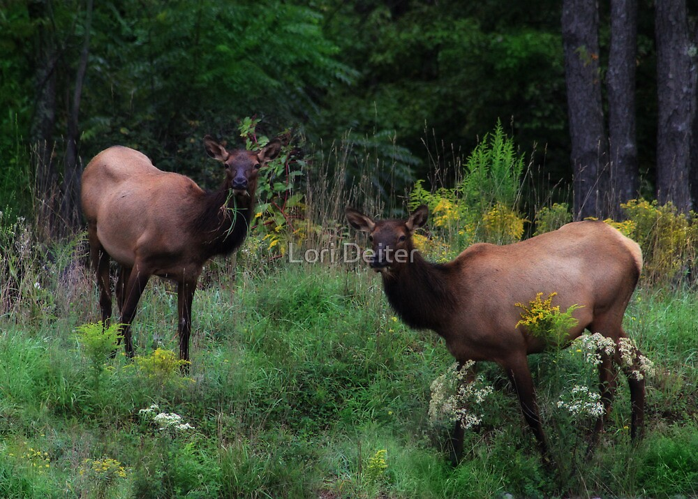 The Girls of Elk County by Lori Deiter