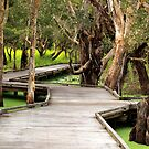 Melaleuca Boardwalk by W E NIXON  PHOTOGRAPHY